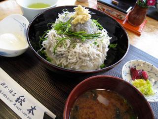 Namashirasu_akimoto_l