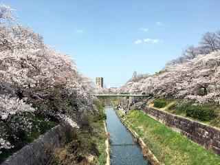 Yamazakigawa1_l