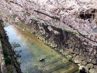 Yamazakigawa3_l