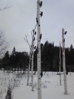 北欧の杜公園